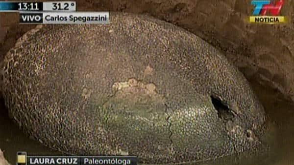 Descubren huevo gigante en el Gran Buenos Aires (sería de un Gliptodonte)