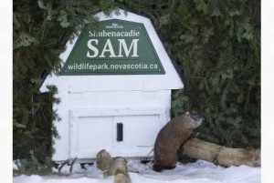 Ontario-s-Wiarton-Willie-contradicts-Nova-Scotia-groundhog