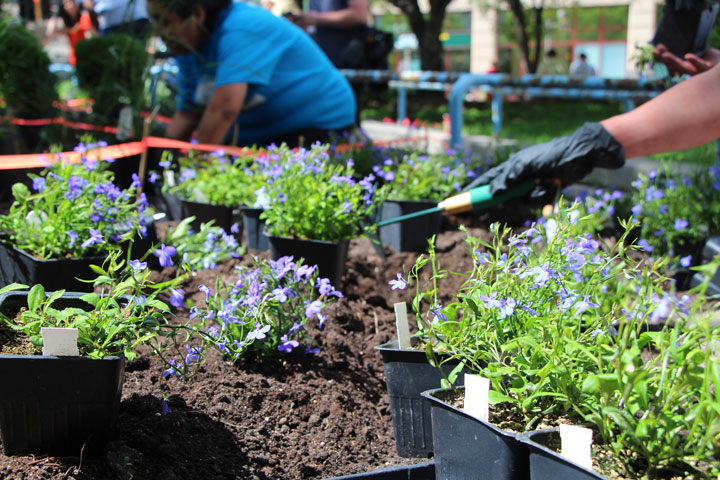Se instala el jardín indígena de Winnipeg, iniciativa que reconecta con la cultura originaria de Canadá