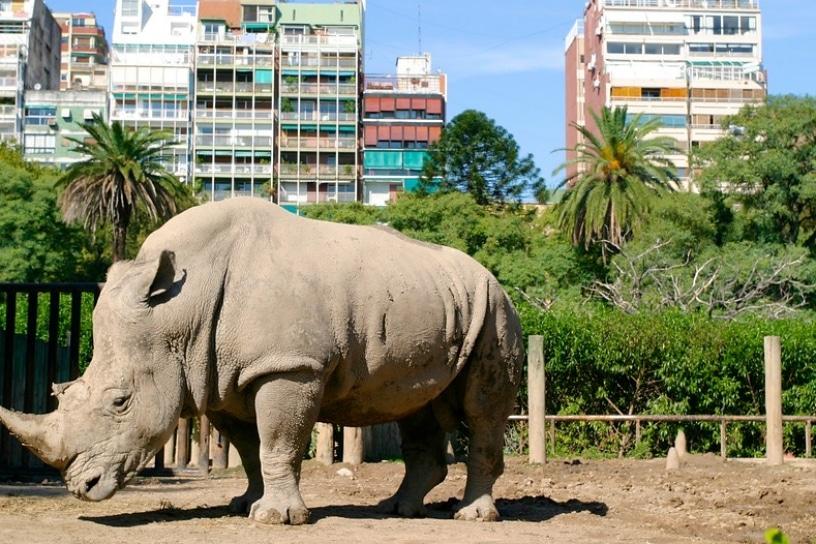 Cerrarán zoológico de Buenos Aires. Las instalaciones pasarán a ser un