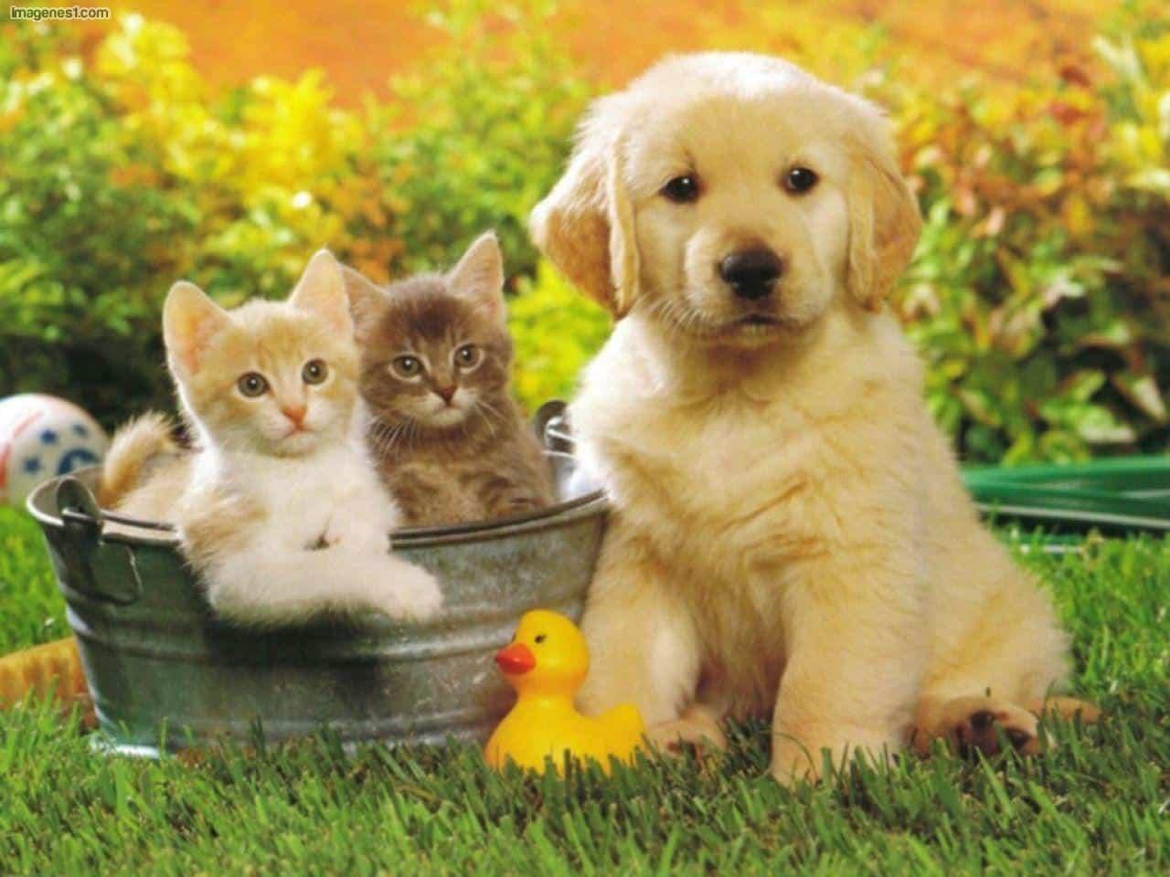 Parlamento canadiense desestima proyecto de ley que buscaba mayor protección a los animales