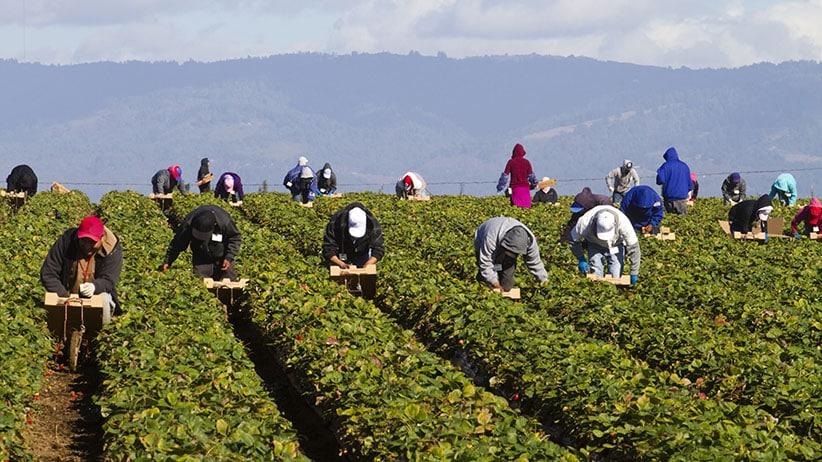 Crisis laboral en sector agricultor en Canadá, señala informe