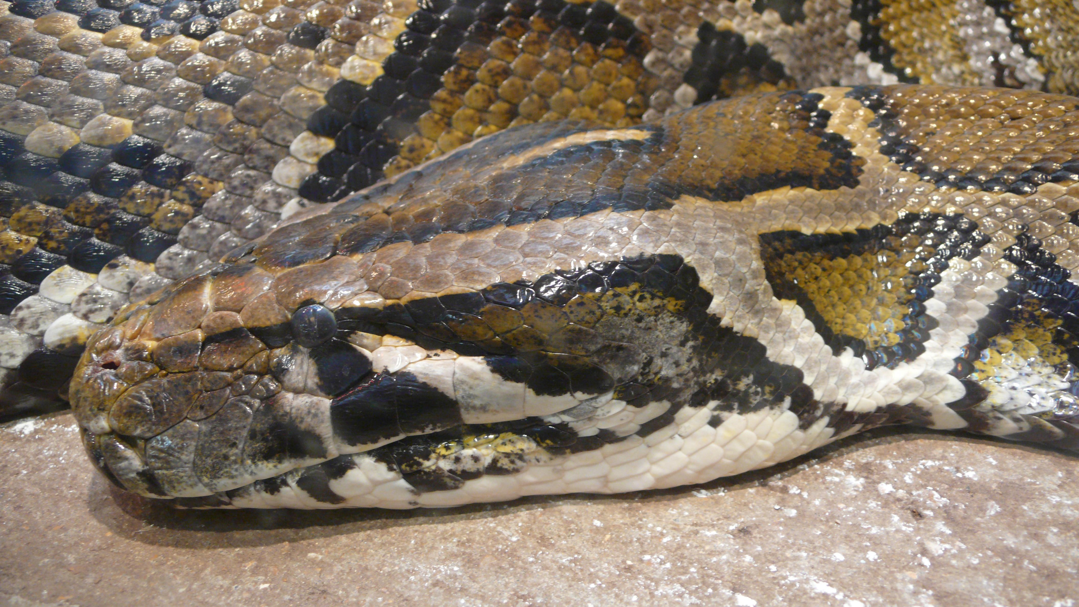 Dos serpientes abandonadas en plena calle en Newmarket