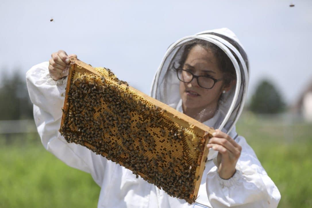 Basurero cercano a Niágara es transformado en una granja para abejas por académicas