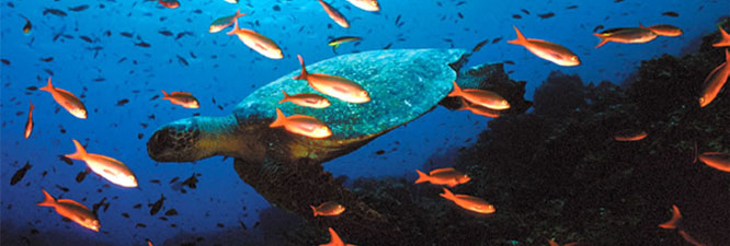 Capturan buque chino con fauna protegida en Ecuador