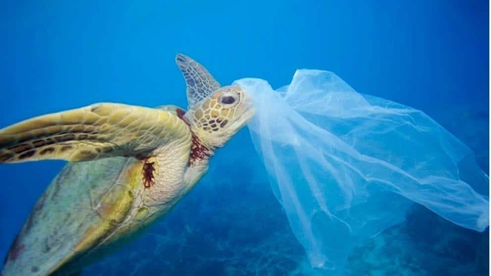 Chile se convierte en el primer país de América en prohibir bolsas plásticas en zonas costeras