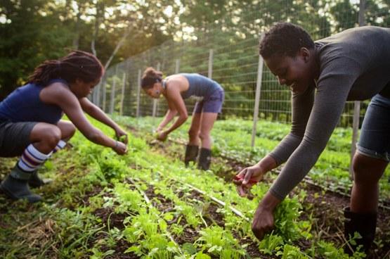 Comunidad de Etobicoke ayuda a la juventud a traves de programas agrícolas