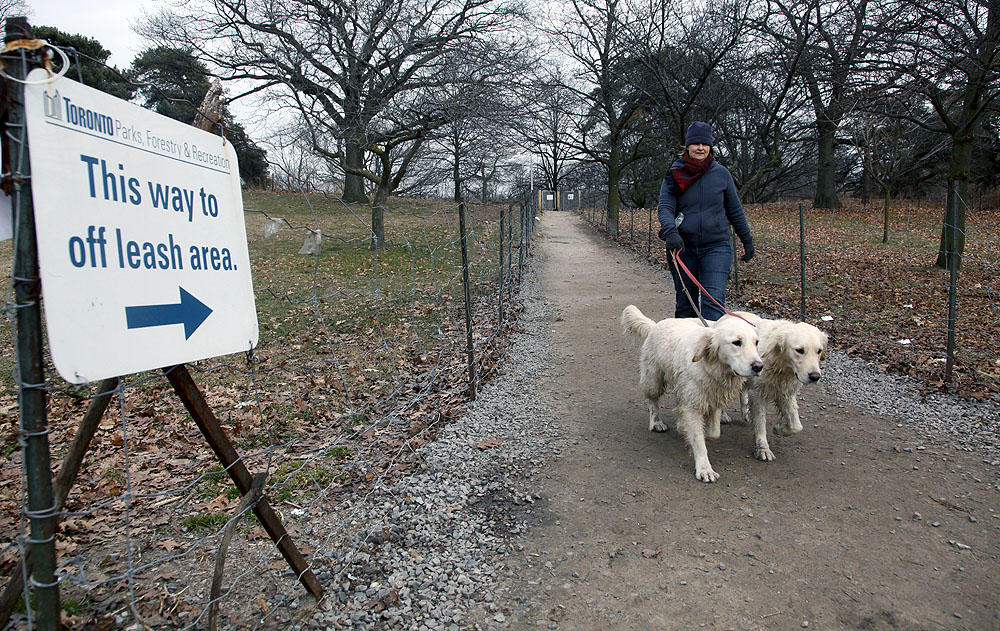 30 patos muertos encontrados en Woodbine Park por posible ataque de perros
