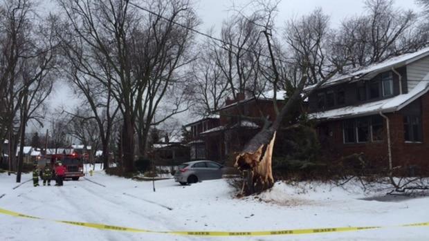 Caídas de árboles, cierre de escuelas, cortes de energía, entre otros problemas dejó la tormenta de hielo